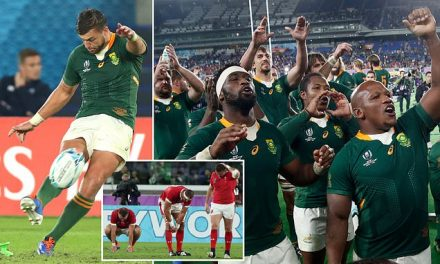 Wales 16-19 South Africa: Springboks to play England in Rugby World Cup final | Daily Mail Online
